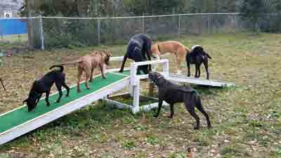 dogs in the dog park on a ramp