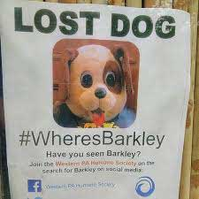poster of missing dog