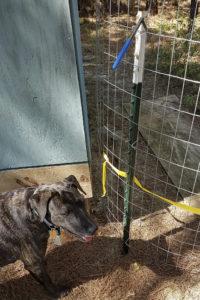 image of my dog next to fence