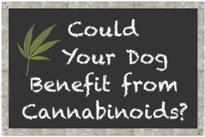 could your dog benefit from cbd
